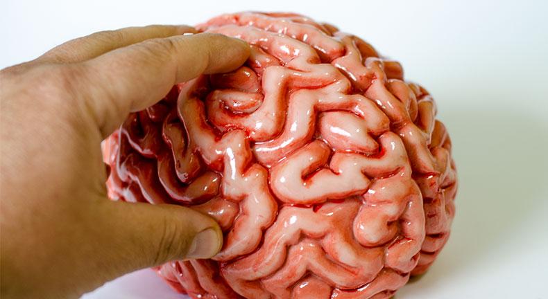 zombi mozak kasica